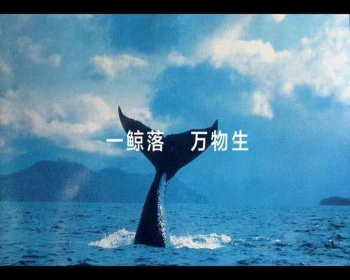 一鲸落万物生,聊没落网站最后的赚钱生态